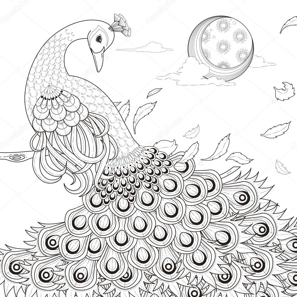 Graceful Peacock Coloring Page Stock Vector C Kchungtw 82670480