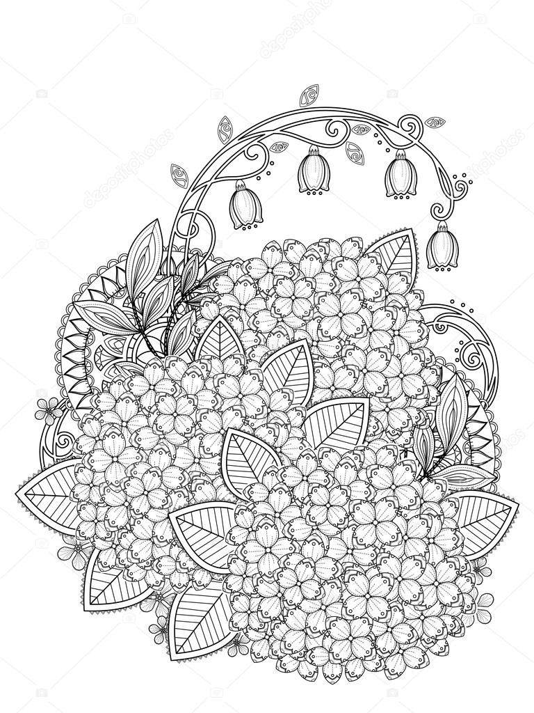 graceful hydrangea coloring page stock vector 97926454