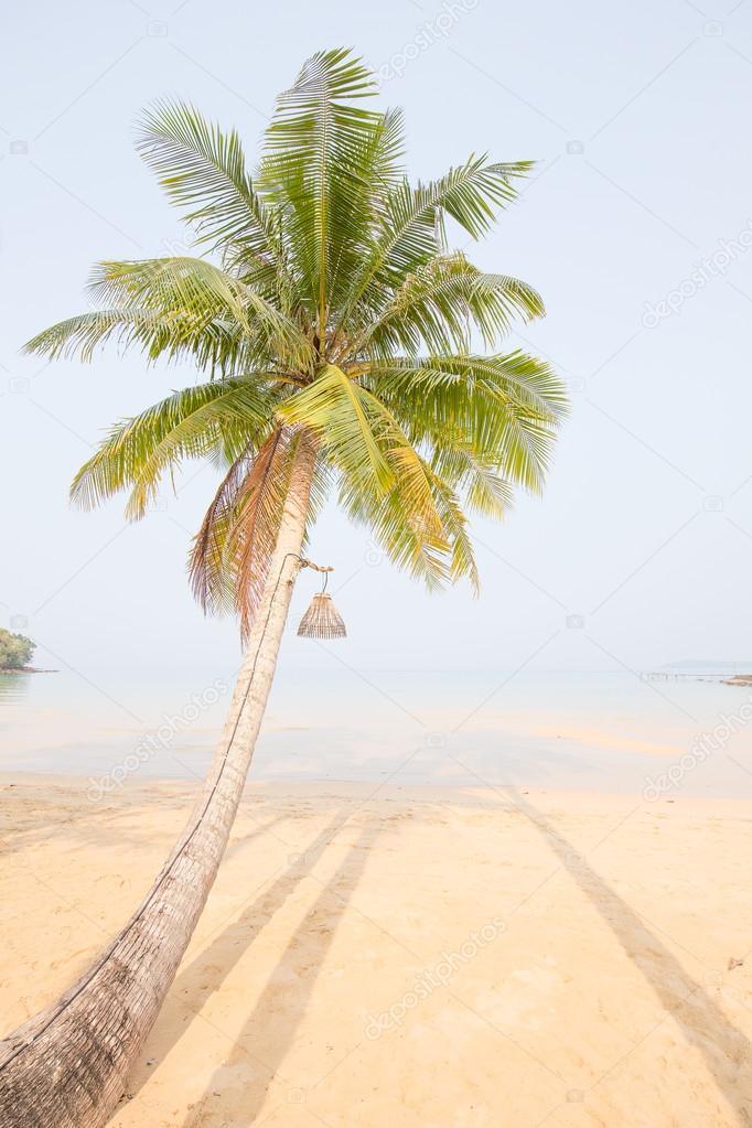 Coconut palm tree over luxury beach
