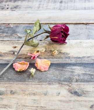 Dried roses on old wooden background