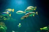 Fotografie im Unterwasser Aquarium Fische