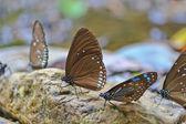 beautiful butterflies close up
