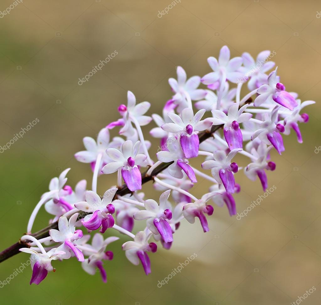 Beautiful Orchids Flowers Stock Photo Deerphoto 105702116