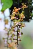 Fotografia bellissimi fiori di orchidea