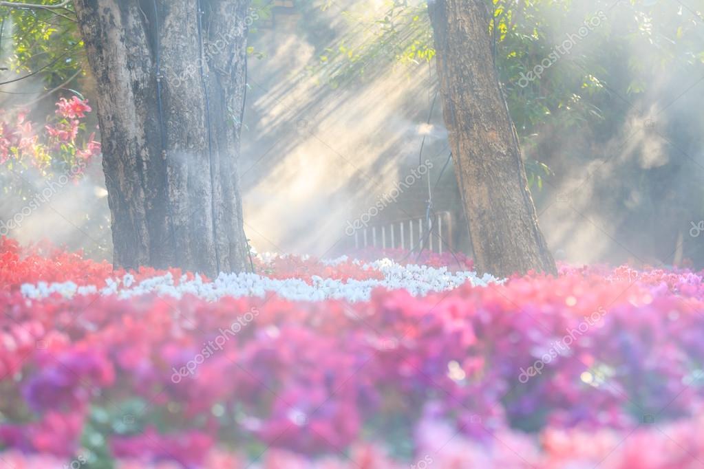flower garden (cyclamen flowers)