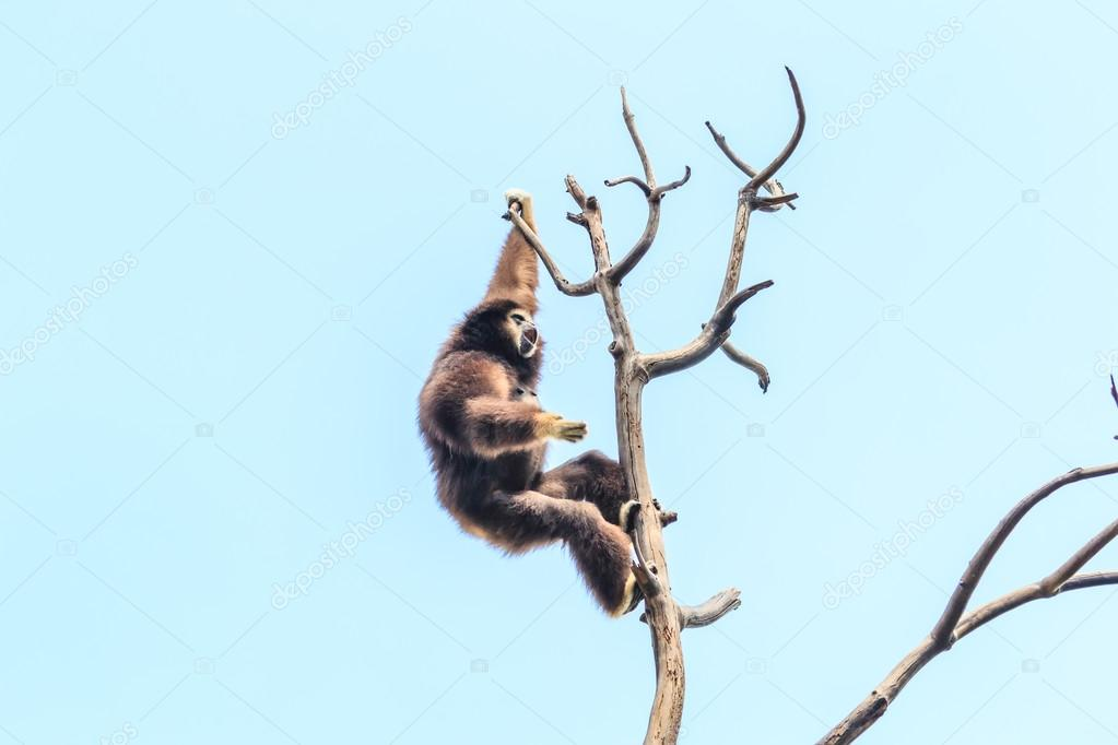 Cute gibbon on tree branch