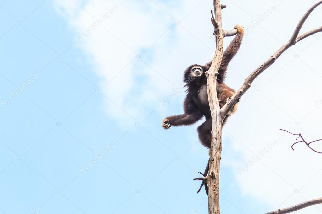 Cute gibbon on tree branch