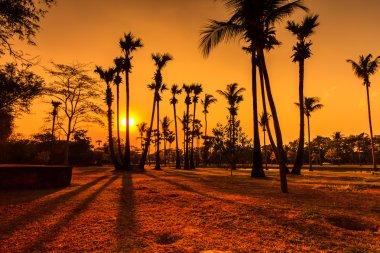 Coconut Tree Silhouettes