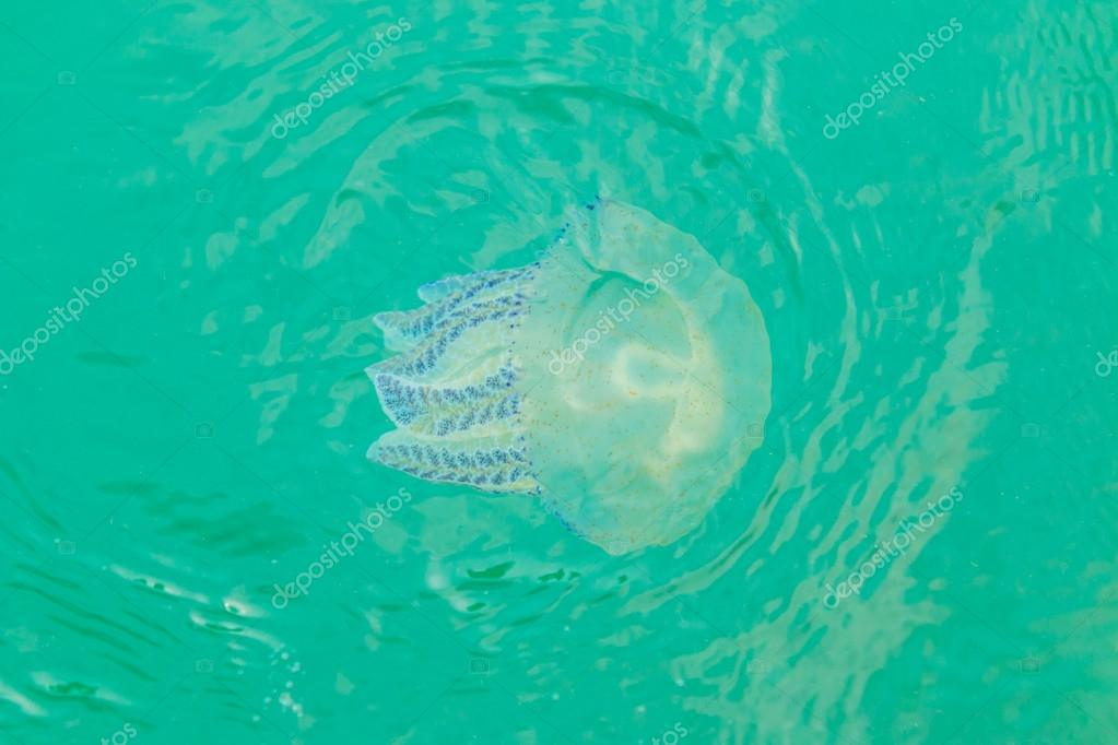 Sea jellyfish floating in the sea