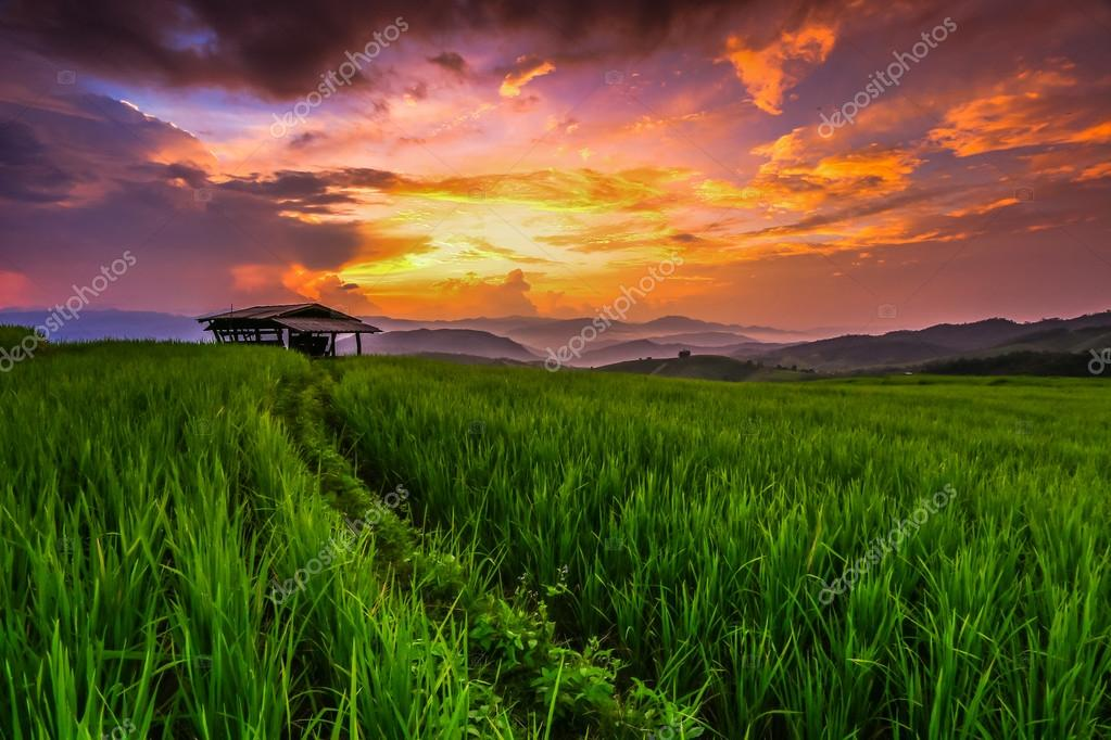 Paddy Green sunset