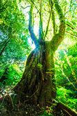 Fényképek Zöld erdőben napfény