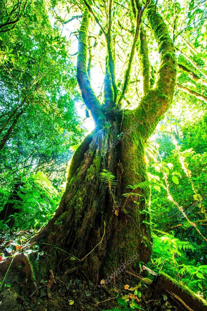 Green forest sunlight