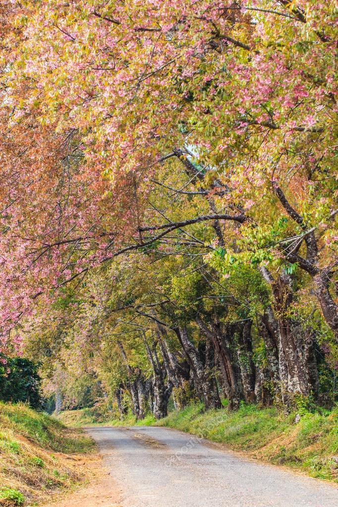Cherry Blossom and sakura tree