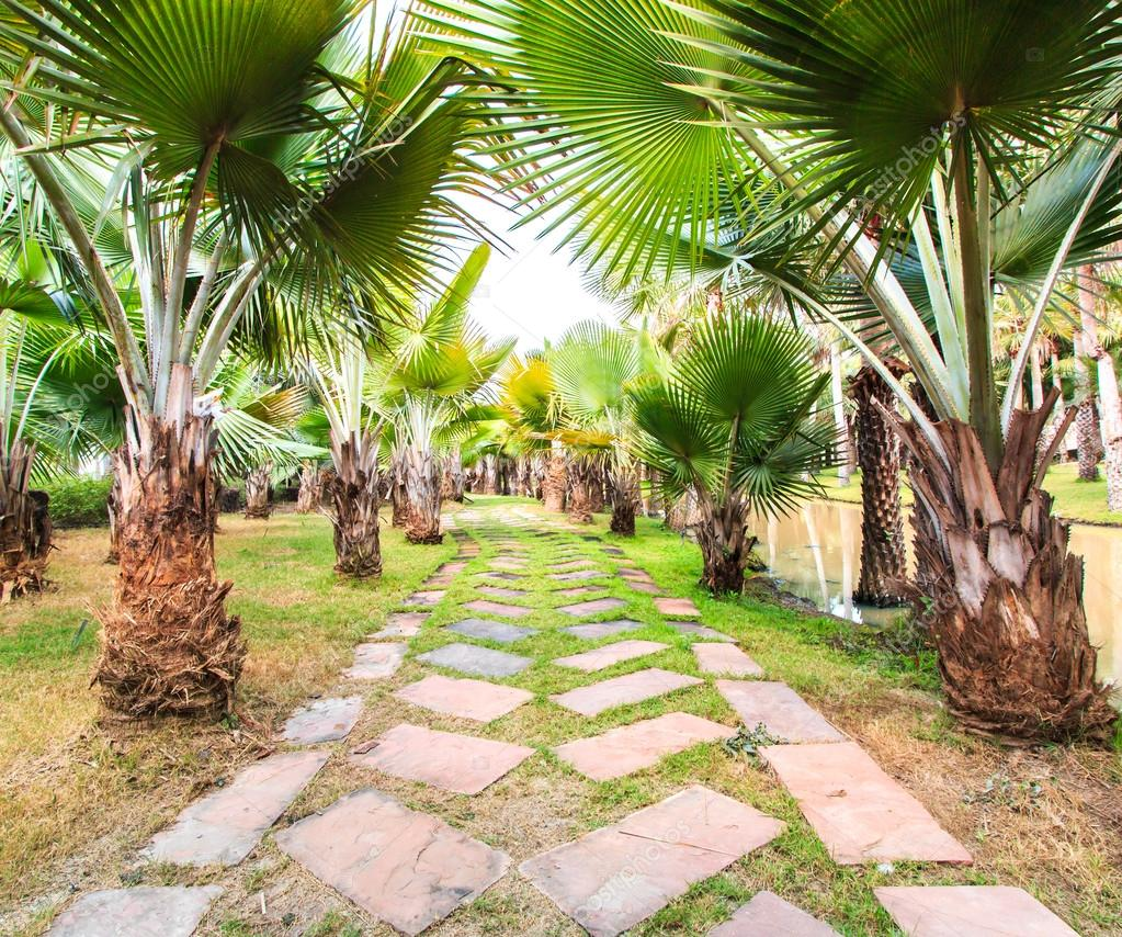 Palm Plantation and way
