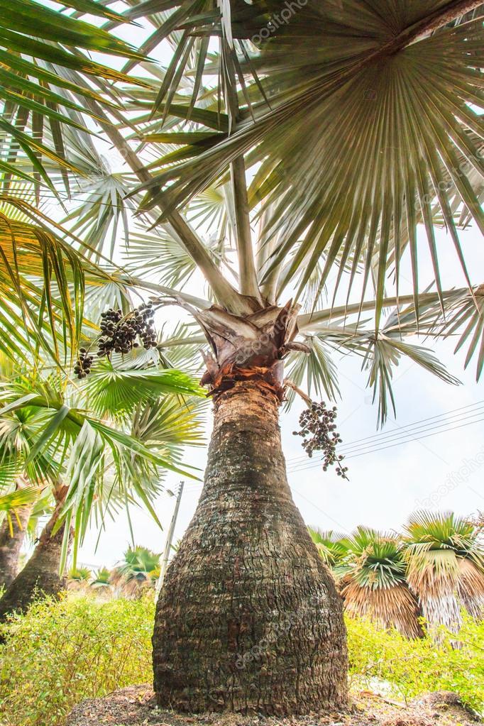 Palm Plantation and way