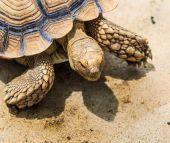 Photo Adorable Turtle animal