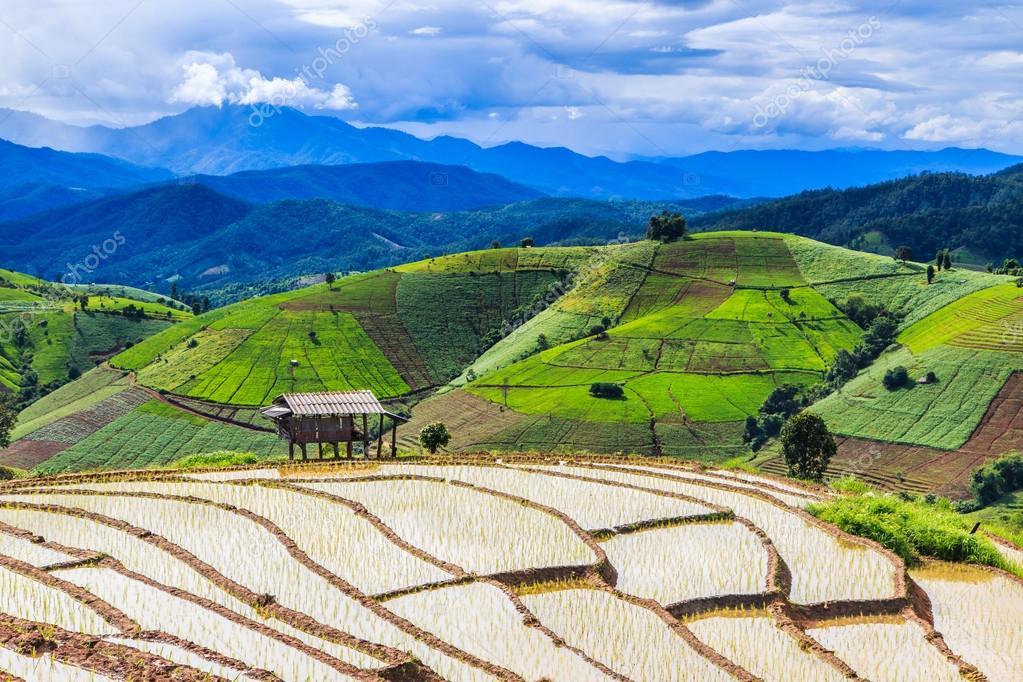 Rice fields at Pa Pong Peang