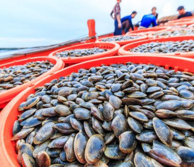 Shellfish on fishing vessels