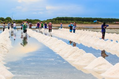 Salt fields - sea salt in Thailand stock vector