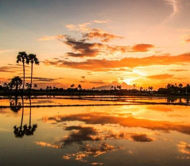 Beautiful Landscape at sunset