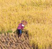 Thajsko farmář v Thajsku