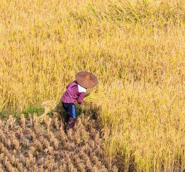 Thailand Farmer in Thailand.
