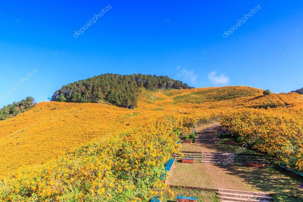 Landscape in Maehongson Province