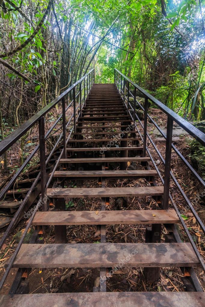 Walkway bridge in forest