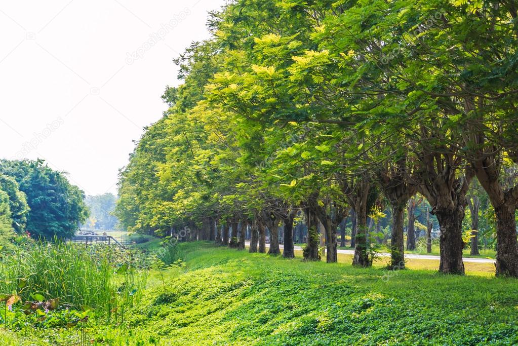 Row of green trees
