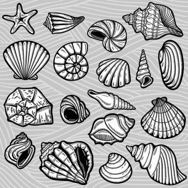 Large set of black&white graphic sea shells. Isolated objects. Retro style.