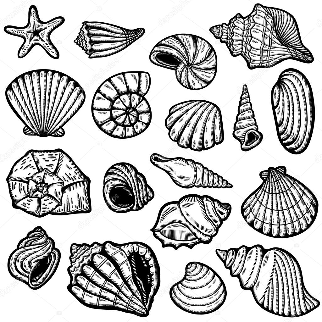 Large set of black&white graphic sea shells. Isolated objects. Retro style.
