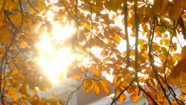 Sun shining through chestnut tree fall leaves in Helsinki City Park, Finland.