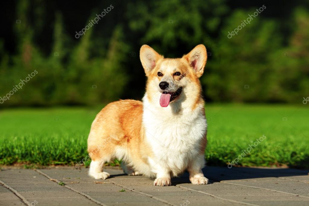 What Are The Breeds Of Dogs That Stay Small