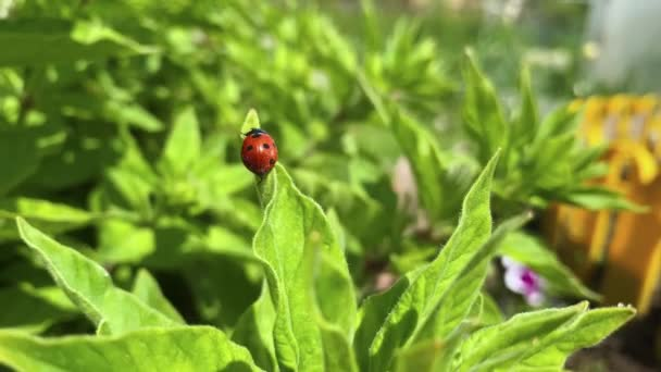A ladybug is crawling on the grass. The concept of summer, nature.