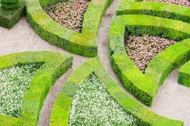 Garden with many different kinds of boxwood
