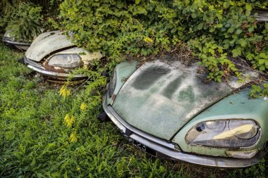 Junk yard with overgrown rotten Citroen DS classic cars