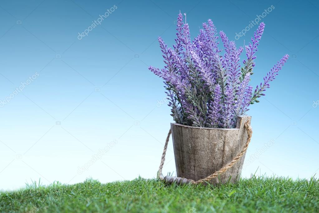 A bunch of violet flowers on a wooden pot in green grass
