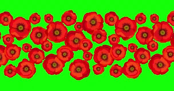 Animace bezešvé smyčky vzor s červenými máky. Jasné květy máku izolované na zelené obrazovce. Červený makový květ mezinárodní symbol míru. Stock 4K video motion animace