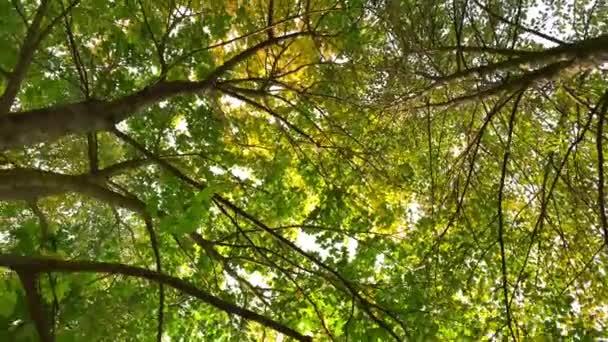 Podzimní žluté a zelené listy na slunečních paprscích a modré obloze