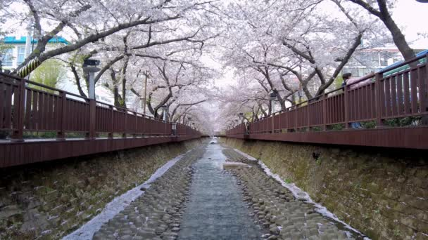 Scenery of yeojwacheon Stream in jinhae, Changwon, Gyeongnam, South Korea, Asia