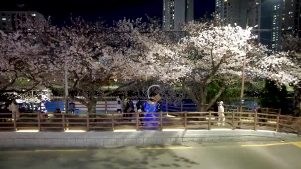 Night view of spring oncheoncheon stream, Busan, South Korea, Asia.