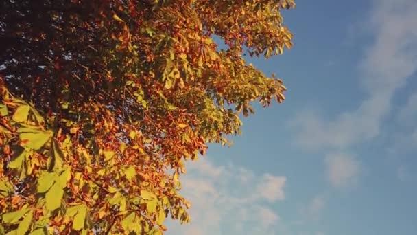 podzimní červené a žluté listí