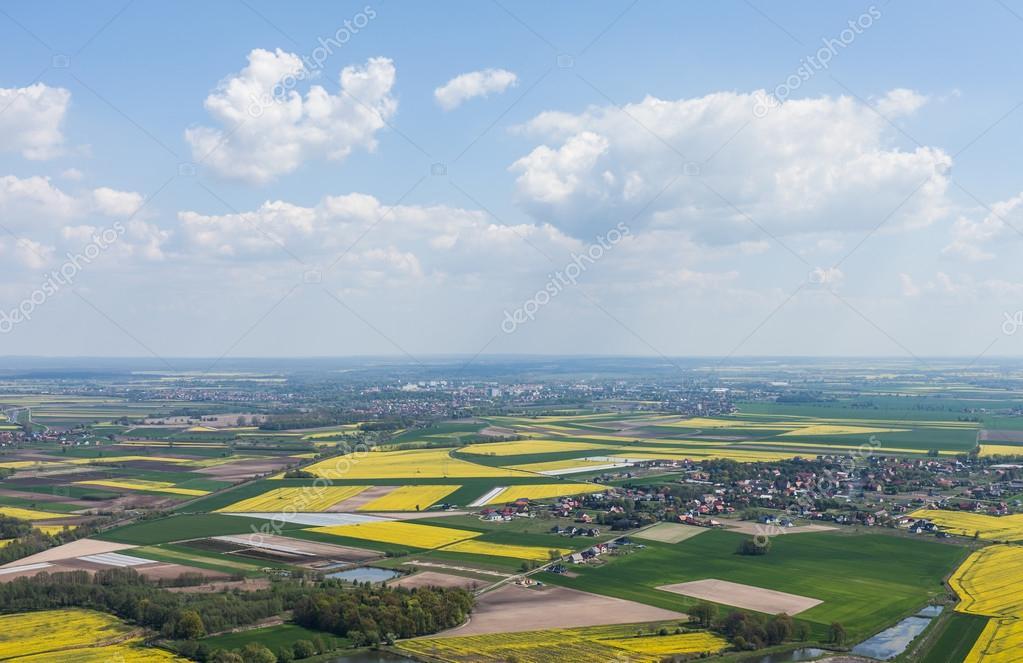 Green harvest fields in Poland