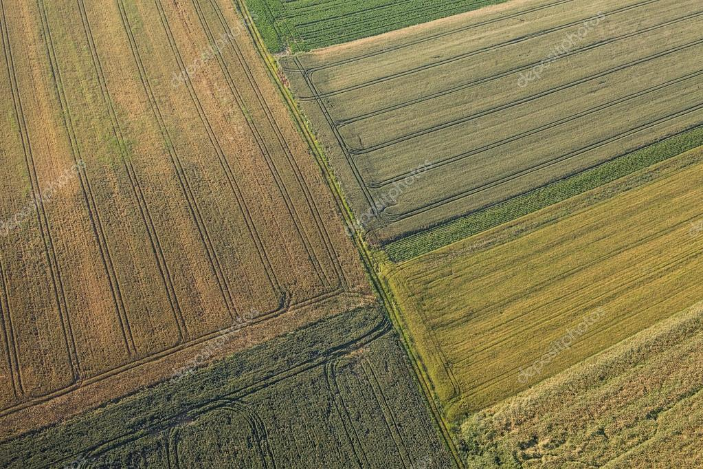 aerial view of the harvest fields  morning landscape