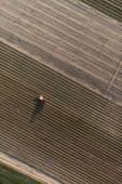 sklizeň pole s traktorem