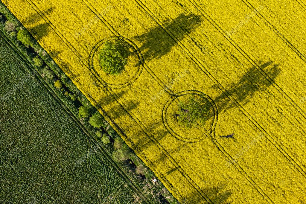 aerial view of yellow harvest fields