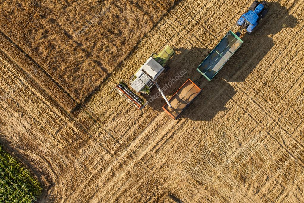 aerial view of the combine on harvest field