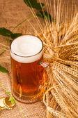 Sklo z lehkého piva a hroty ječmene