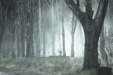 Shining light through eerie mystic spooky fog shimmering in the woods of dark forest. stock vector