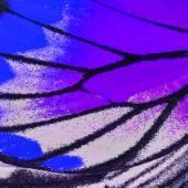 pillangó szárnya